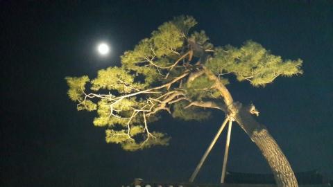 달을품은나무